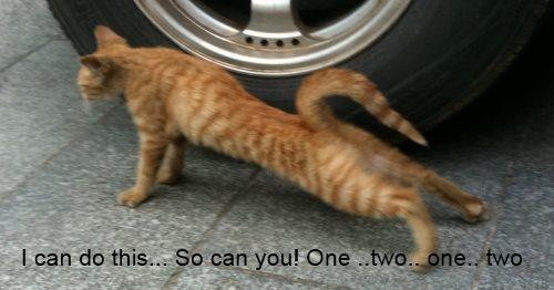 pushup cat