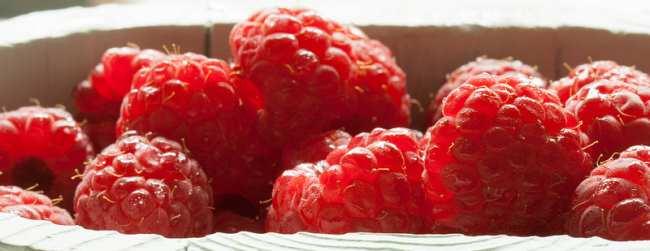 where can i find raspberry ketone