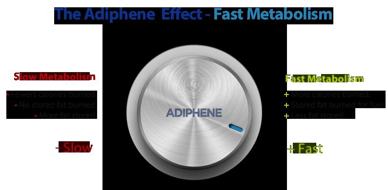 metabolism-dial-adiphene