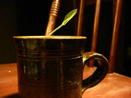 green tea polyphenols_