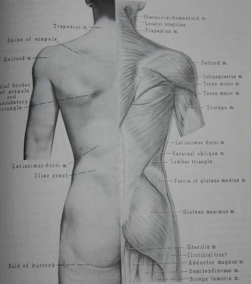 Science behind butt enhancement
